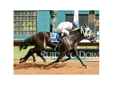 3-year-old Ocean Lad (#1, inside) raced to the win by a scant nose over his 4-year-old brother Oceanor.