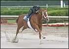 Good and Tough filly posted fastest eighth of a mile time during Under Tack show Sunday.
