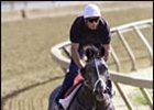 Distilled Injured in Gallop; Out of Preakness