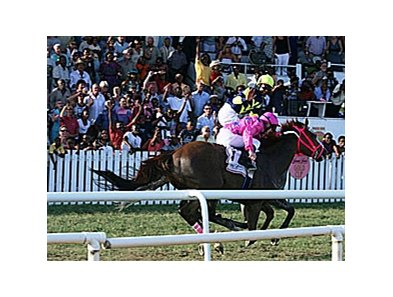Canadian-bred Sterwins furnished a last-to-first rally to win the Gold Cup at the Garrison Savannah racecourse in Bridgetown, Barbados.