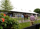 Buyers look over yearlings at the Fasig-Tipton Kentucky July select yearling sale.
