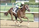 Limehouse remained undefeated with Bashford Manor victory on Churchill Downs' closing day card.