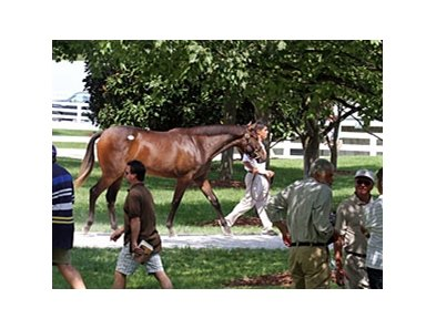 Keeneland September Sale