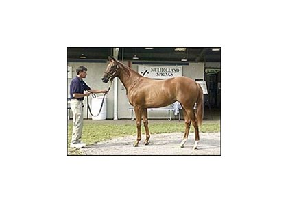 Mr. Greeley filly topped Thursday session of the Fasig-Tipton yearling sale.