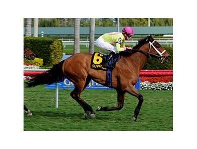 "Stradivinsky<br><a target=""blank"" href=""http://www.bloodhorse.com/horse-racing/photo-store?ref=http%3A%2F%2Fpictopia.com%2Fperl%2Fgal%3Fprovider_id%3D368%26ptp_photo_id%3D9380219%26ref%3Dstory"">Order This Photo</a>"