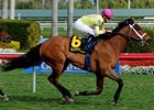Dutrow Hoping to Send a Pair to Dubai
