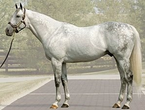 Unbridled's Song's Fee Set at $85,000