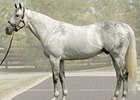 Unbridled's Song will stand in 2009 for the same $150,000 fee that he stood for in 2008.