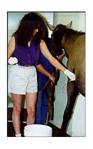 Dr. Johanna Reimer drains fluid from the sac around a yearling's heart.