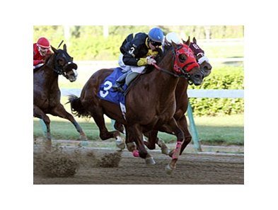 Hialeah is running its initial Quarter Horse meet of 40 race days through Feb. 2, 2010.