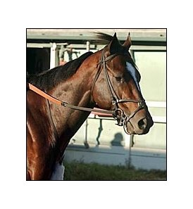 Zavata, to stud at Walmac in 2004.