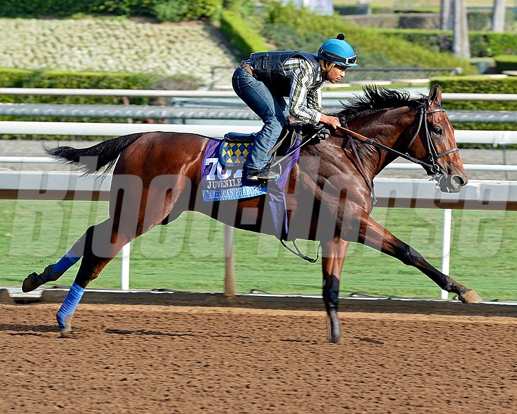 American Pharoah with Martin Garcia works for Bob Baffert on Oct. 26, 2014, at Santa Anita in preparation for the Breeders' Cup. 2Origs10_26_14 image Anne M. Eberhardt photo