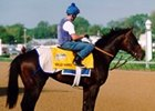 Worldly Manner, shown at Churchill Downs in 1999, is being retired to stud in Florida.