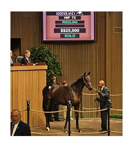 Hip 72 sold for $925,000 at the Keeneland September Sale.
