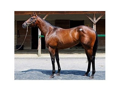 Hip 492, sold for $600,000
