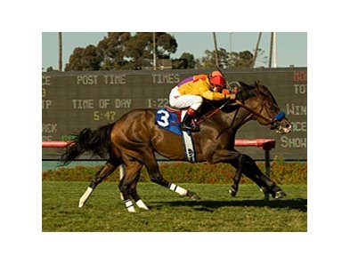 "Tuscan Evening was assigned top weight of 121 pounds for the Monrovia.<br><a target=""blank"" href=""http://www.bloodhorse.com/horse-racing/photo-store?ref=http%3A%2F%2Fpictopia.com%2Fperl%2Fgal%3Fprovider_id%3D368%26ptp_photo_id%3D8320304%26ref%3Dstory"">Order This Photo</a>"