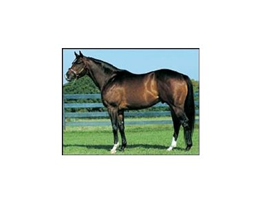 Leading freshman sire Valid Expectations.