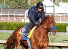 Sidney's Candy worked 5 furlongs at Churchill Downs on April 17.
