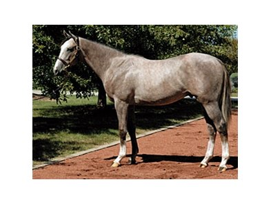 "Dunkirk as a yearling in September 2007. He sold for $3.7 million.<br><a target=""blank"" href=""http://www.bloodhorse.com/horse-racing/photo-store?ref=http%3A%2F%2Fpictopia.com%2Fperl%2Fgal%3Fprovider_id%3D368%26ptp_photo_id%3D7949229%26ref%3Dstory"">Order This Photo</a>"