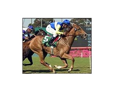 Megahertz wins the Beverly Hills Handicap with ususal late run.