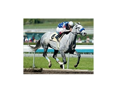 Louisiana Derby winner Wimbledon has been installed the morning line favorite for the Santa Anita Derby.