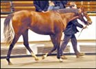Spectrum filly sold for record price at Tattersalls.