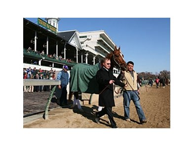 Curlin parades at Churchill Downs on November 29.
