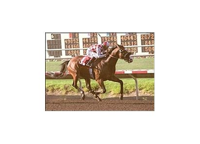 Disturbingthepeace runs to victory in the Pat O'Brien Handicap Sunday at Del Mar.