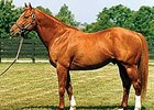 Eclipse Award winner Gilded Time will stand in Alberta, Canada, in 2008.