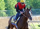 "Bodemeister<br><a target=""blank"" href=""http://photos.bloodhorse.com/TripleCrown/2012-Triple-Crown/Preakness-Stakes-137/23013252_TrG3NS#!i=1854002332&k=TcjSMK6"">Order This Photo</a>"