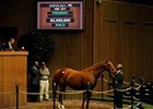 Eight Belles' dam Away sells for $2.5 million at Keeneland Nov. 3.