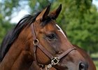 La Ville Rouge