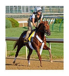 "Ice Box<br><a target=""blank"" href=""http://www.bloodhorse.com/horse-racing/photo-store?ref=http%3A%2F%2Fpictopia.com%2Fperl%2Fgal%3Fprovider_id%3D368%26ptp_photo_id%3D8895768%26ref%3Dstory"">Order This Photo</a>"