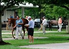 Yearlings at the Fasig-Tipton Kentucky July select auction.