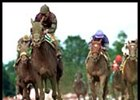 Whywhywhy, second from left, leads the field to the finish in the Sanford.