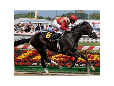 "Chelokee <br><a target=""blank"" href=""http://www.bloodhorse.com/horse-racing/photo-store?ref=http%3A%2F%2Fpictopia.com%2Fperl%2Fgal%3Fprovider_id%3D368%26ptp_photo_id%3D1229952%26ref%3Dstory"">Order This Photo</a>"