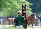F-T Kentucky Select Sale: Horses to Watch