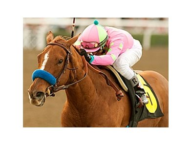 Always A Princess in the 2011 El Encino Stakes.