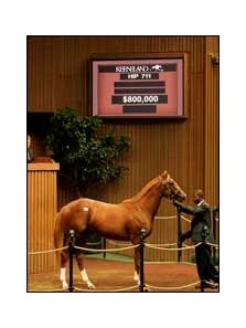 $800,000 colt; Mr. Greeley - Matsue by Lure
