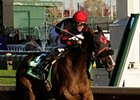 Musical Romance Upset Winner of F&M Sprint