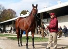 Havre de Grace at the Fasig-Tipton November Sale.