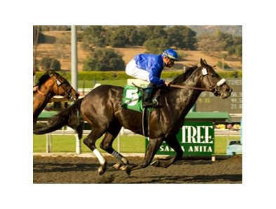 "Gayego winning the 2009 Ancient Title Stakes<br><a target=""blank"" href=""http://www.bloodhorse.com/horse-racing/photo-store?ref=http%3A%2F%2Fpictopia.com%2Fperl%2Fgal%3Fprovider_id%3D368%26ptp_photo_id%3D8548174%26ref%3Dstory"">Order This Photo</a>"