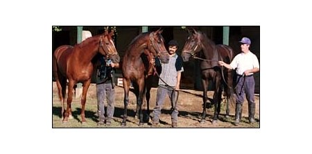 Banshee Breeze (center) is flanked by her full sister Unbridled Wind (right) and half-sister Charm (left) at Carl Nafzger's barn in Saratoga in August 1999.