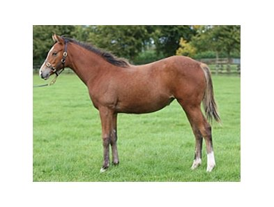 The only living foal by the late George Washington is consigned through the Irish National Stud.