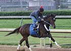 Horse of the Year Rachel Alexandra breezes four furlongs at Churchill Downs under jockey Shaun Bridgmohan.