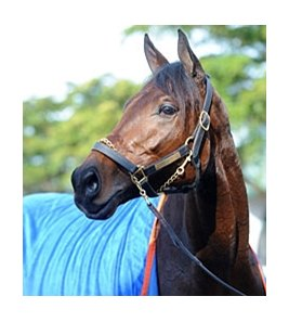 "Uncle Mo<br><a target=""blank"" href=""http://www.bloodhorse.com/horse-racing/photo-store?ref=http%3A%2F%2Fpictopia.com%2Fperl%2Fgal%3Fprovider_id%3D368%26ptp_photo_id%3D9388239%26ref%3Dstory"">Order This Photo</a>"