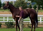 Azeri to Sell at Keeneland January Sale