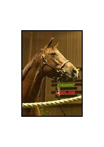 Twenty Eight Carat, the dam of A P Valentine, brought a top price of $4-million.