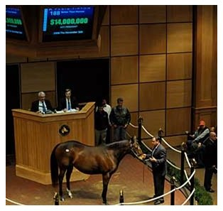 Better Than Honour sold for $14 million at Fasig-Tipton.