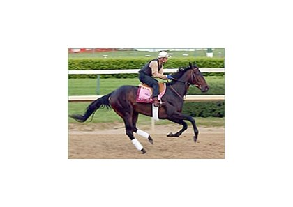 Halfbridled, working at Churchill on Thursday.
